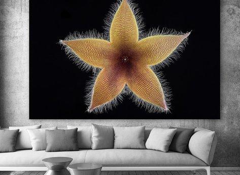 Ljuddämpande - Stjärna