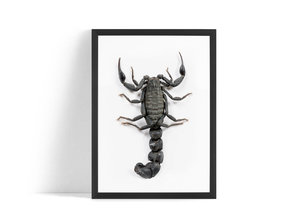 Skorpion Poster