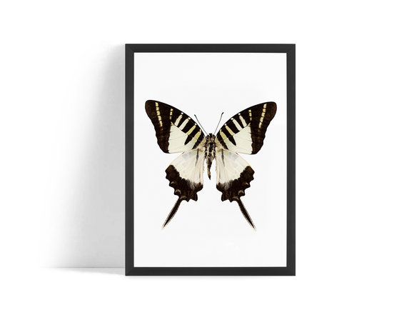 Fjäril Poster