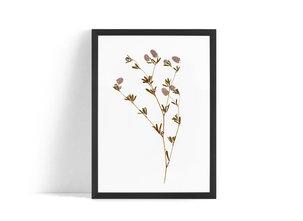 Torkad blomma Poster