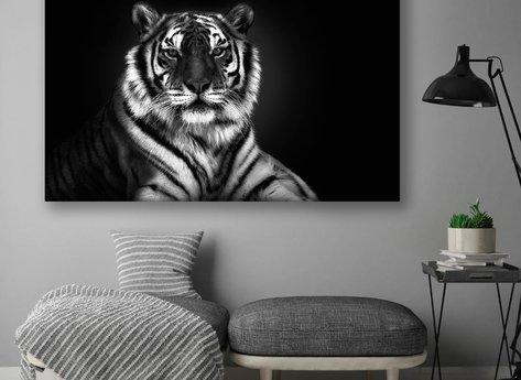 Photo Art - White Tiger