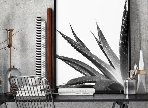 Prints - Cactus