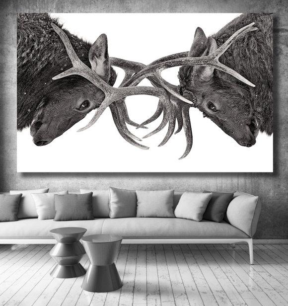 Kronhjortstavla - Duell